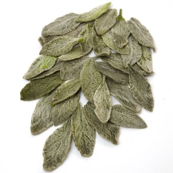 Stachys Leaves - Green - 50mm (Pack of 100)