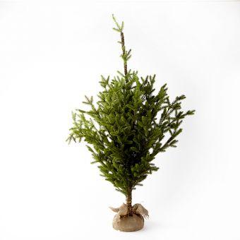 Alpine Tree - 60cm x 60cm x 100cm