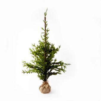Alpine Tree - 70cm x 70cm x 150cm