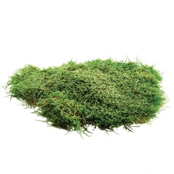 Flat Moss (Pack of 500g)
