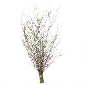 Spring Branches - Lilac