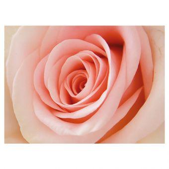 Pink Rose - Folded Plain Card (Pack of 25)