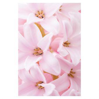 Pink Hyacinth (Pack of 25)