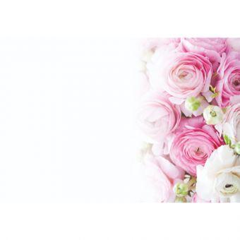 Pink & White Ranunculus (Pack of 50)