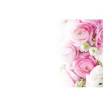 Pink & White Ranunculus - Large (Pack of 9)