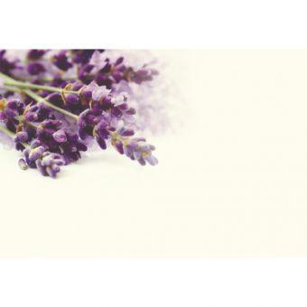 Lavender (Pack of 50)