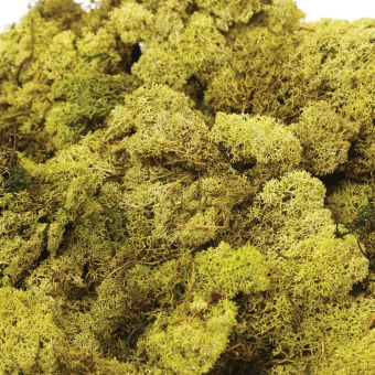 Finland Moss in Olive (Pack of 50g)