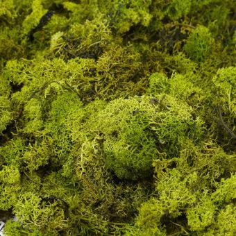 Finland Moss in Dark Green (Pack of 500g)