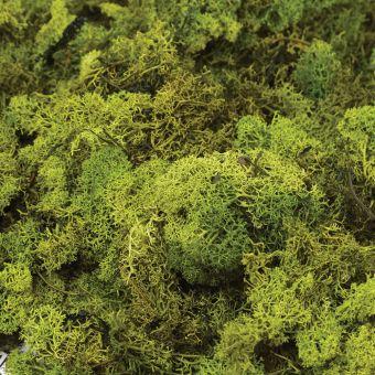 Finland Moss in Dark Green (Pack of 50g)