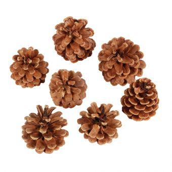 Pine Cones - Austriaca - 1 kg